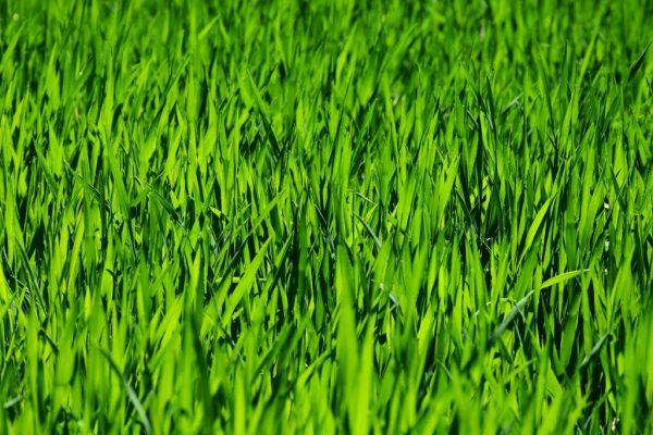grass-3336700_1920